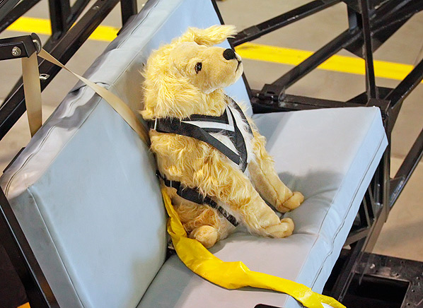 Dog Harnesses Pet Restraint Safety Consumer Reports News