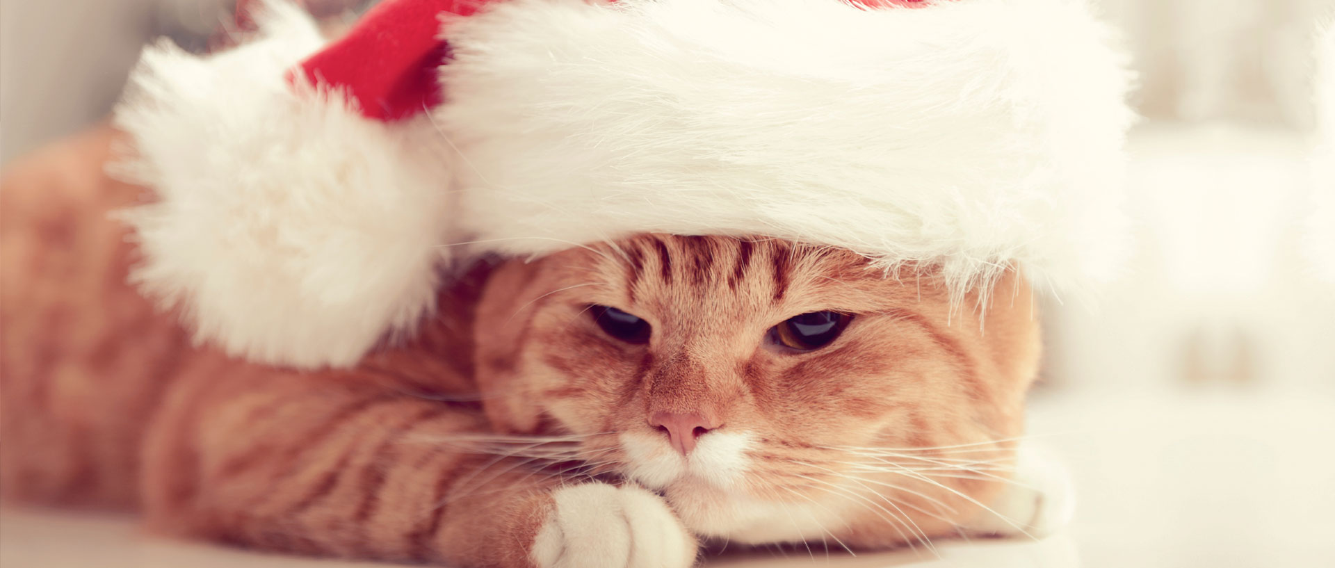 Don T Let Pet Allergies Ruin Your Holidays Consumer Reports