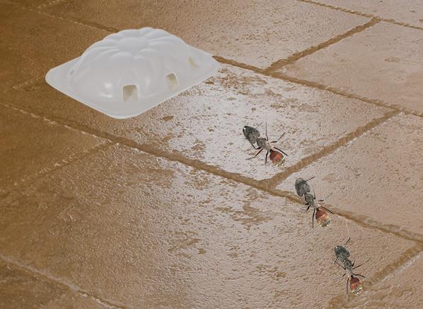 how safe are indoor bug sprays consumer reports. Black Bedroom Furniture Sets. Home Design Ideas