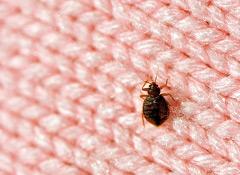 CDC warns about bedbug pesticides