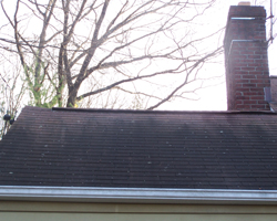 Tip Of The Day Get Rid Of Roof Algae Which Can Damage